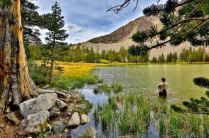 fisherman-fishing-in-a-peaceful-forested-area-631x420