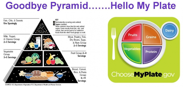 my_food_pyramid 4